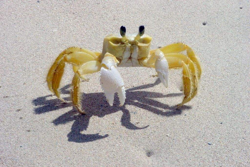 Tropical Island Beach Ambience Sound: Ghost Crabs And Tequila